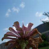 Gardening 2011 - 100_0147.JPG
