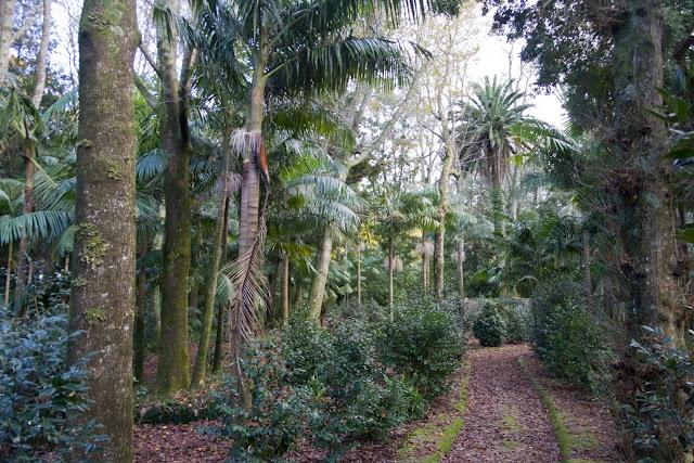 Árboles de muchas partes del mundo en la pequeña isla de las Azores