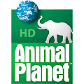 Ver canal Animal Planet Online HD gratis en Vivo por internet