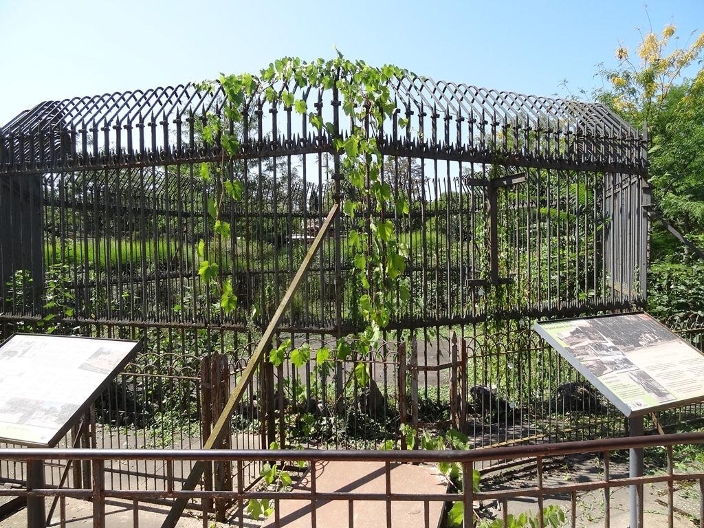 [2018.08.21-006-premire-cage--ours-du%5B2%5D]
