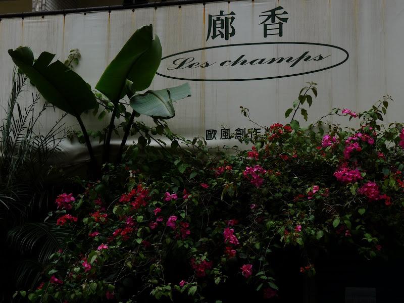 TAIWAN . Taipei De Shandao Temple jusqu à T 101 à pied... - P1160287.JPG
