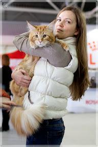 cats-show-24-03-2012-fife-spb-www.coonplanet.ru-006.jpg