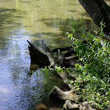 04-07-12 Homosassa Springs State Park - IMGP4520.JPG