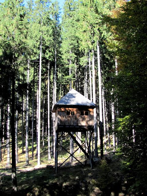 Ciucas: foisor de observatie animale