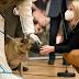 النمسا : استخدام كلاب القوات المسلحة المدربة فى الكشف عن مرضى كورونا