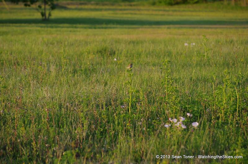 2013 Spring Flora & Fauna - IMGP6331.JPG