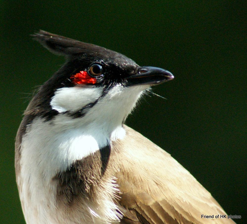 Photographic Wildlife Stories In UK/Hong Kong: Portraits
