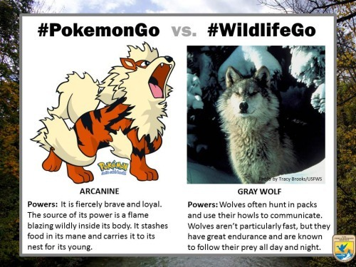 pokemongo-vs-wildlifego-1