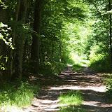 Forêt de Dreux : allée forestière aux Hautes-Lisières (Rouvres, 28), 3 juin 2010. Photo : J.-M. Gayman