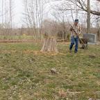 Owen rakes.  Notice the stump from the cedar tree.
