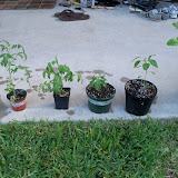 Gardening 2010, Part Two - 101_2882.JPG