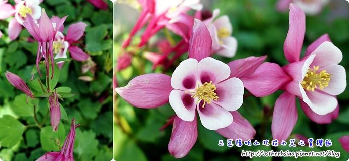 22 特別的花