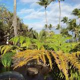 Hawaii Day 6 - 100_7595.JPG