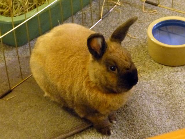 Rabbit lick me