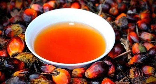 palmic-oil2