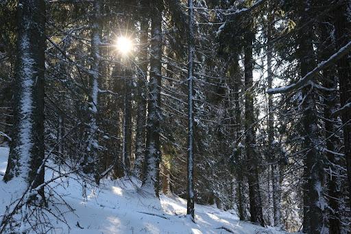 Slnko cez les