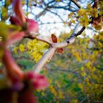 Spring (4 of 25).jpg
