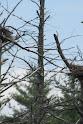 Heron Colony at Libby Hill-009.JPG