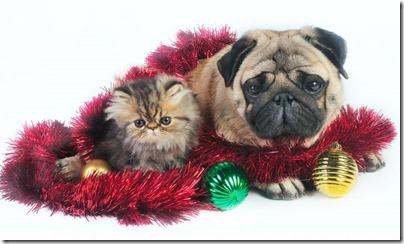perros y gatos naivdad  (2)