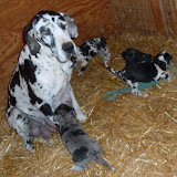 Gretta & Cobalt Blues 3/24/12 litter - SAM_3443.JPG