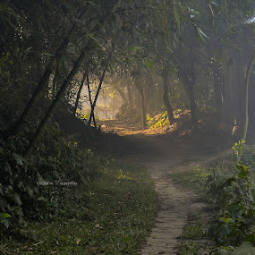The light will come. by Sofia Zaman - Uncategorized All Uncategorized ( nature, pathway, greenery, morning glory, nature close up, forest, sun light )