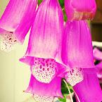 20120731-01-flowers-backyard.jpg