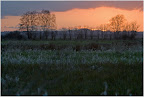 Sunset über dem Teufelsmoor