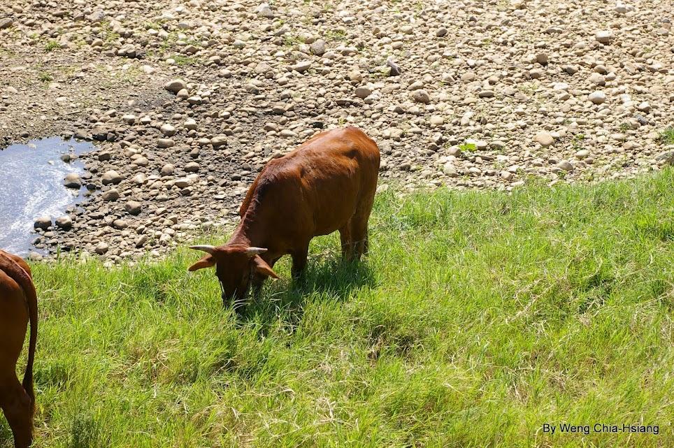 kit 鏡初體驗之放牛吃草篇之二