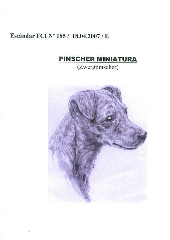 ESTANDAR PINSCHER MINIATURA