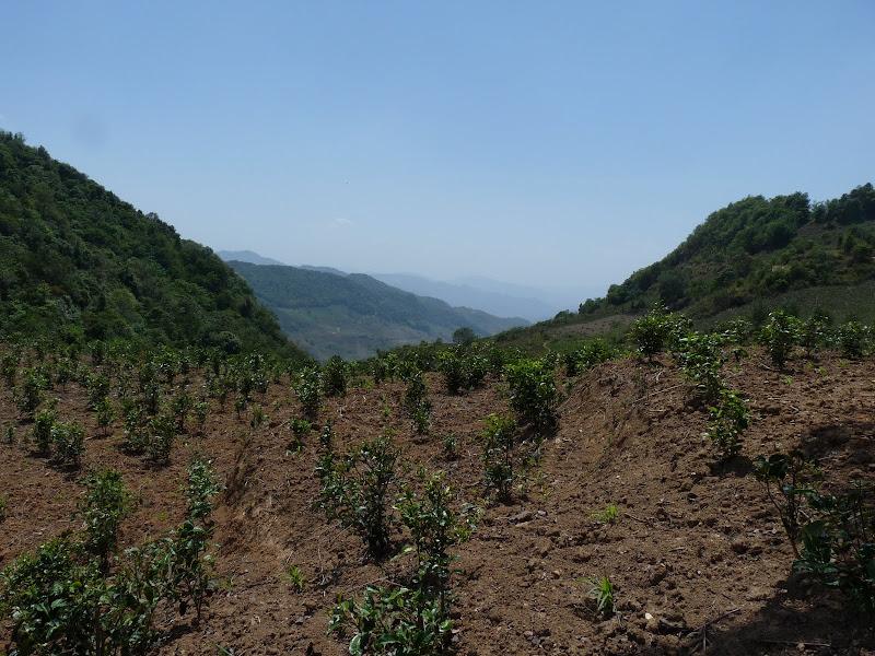 Chine: randonnée xishangbanna, région de Bada - Picture%2B802.jpg