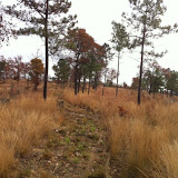 Hunting Habitat 3, Anderson Creek