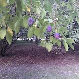 Endelave en skøn oktoberdag 2013 - WP_000514.jpg
