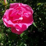 Gardening 2013 - 115_6231.JPG