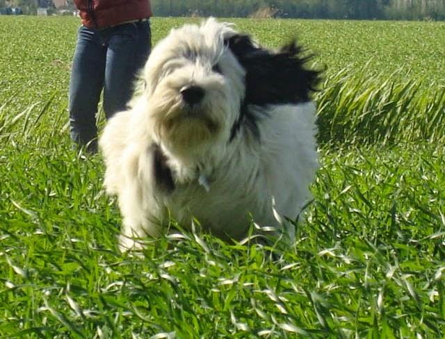 Lola rennen
