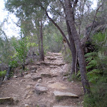 Following the rocky bushtrack (23109)