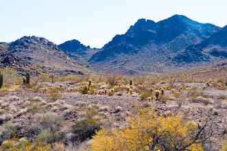 Photo: On King Road entering Kofa (King of Arizona) NWR