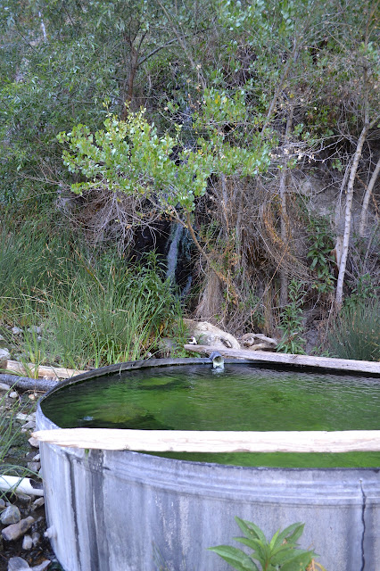Willett Hot Spring tub