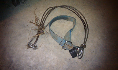 collar with three-part short wire tether attached with padlock