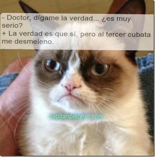 gato guñon meme robados (2)