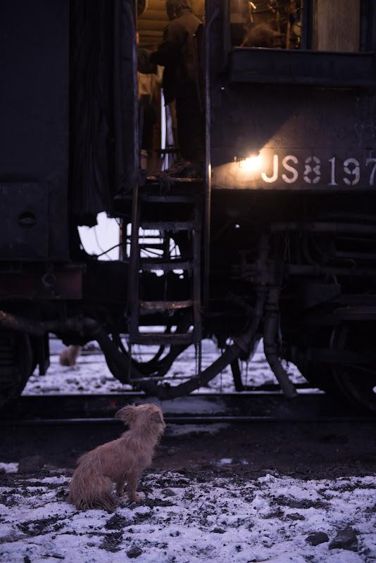 170101 運転台を覗き込む犬
