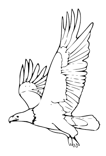 bald eagle coloring page for kids - Bald Eagle Coloring Page