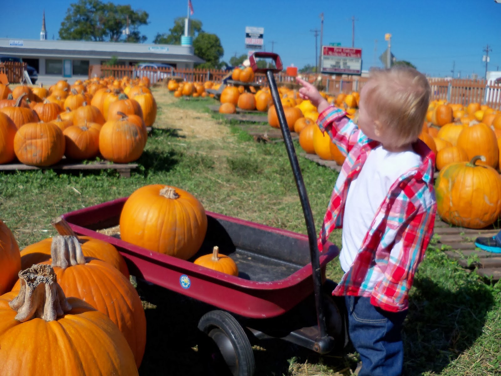 Pumpkin Patch - 115_8275.JPG