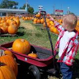 Pumpkin Patch - 115_8275.JPG