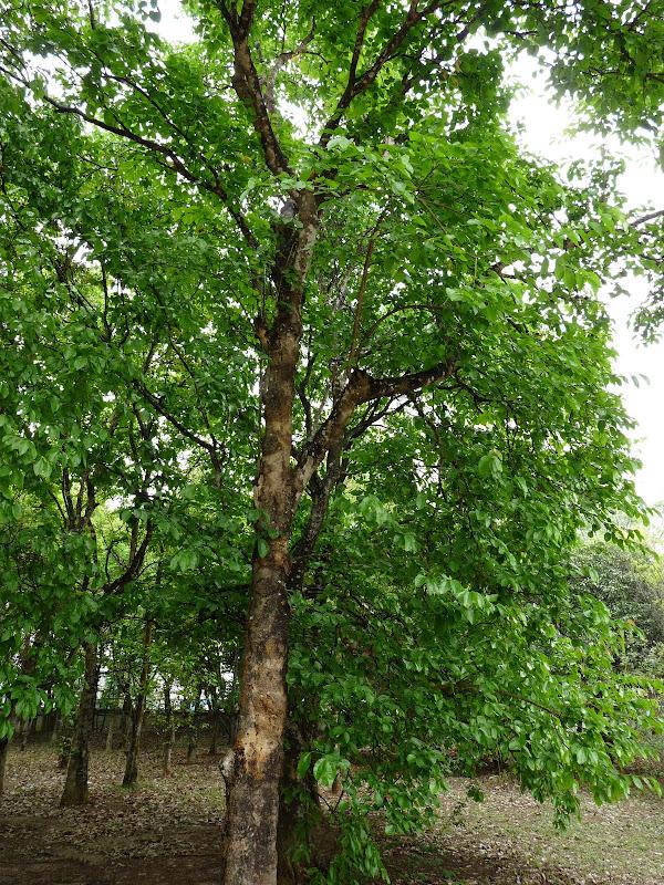 Chine .Yunnan . Lac au sud de Kunming ,Jinghong xishangbanna,+ grand jardin botanique, de Chine +j - Picture1%2B682.jpg