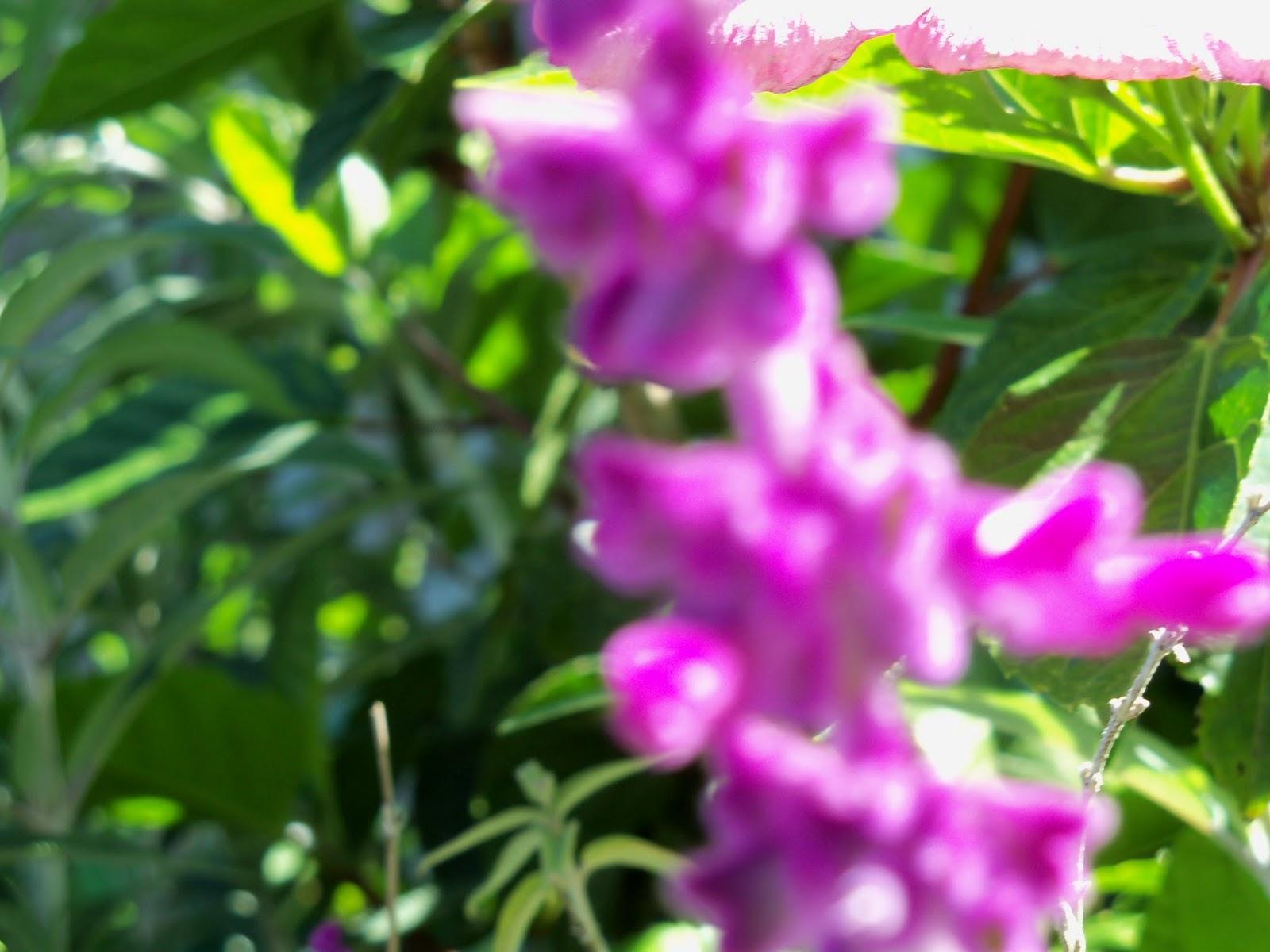 Gardening 2013 - 115_6218.JPG