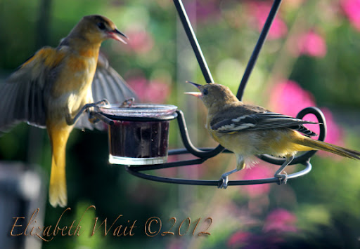 IMG_8196-2012-07-23-09-19.jpg