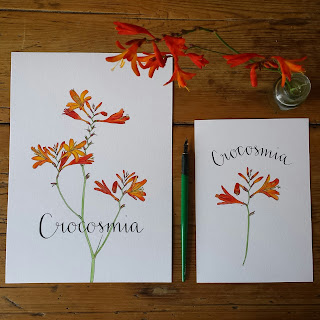 www.AliceDrawsTheLine.co.uk :: Crocosmia