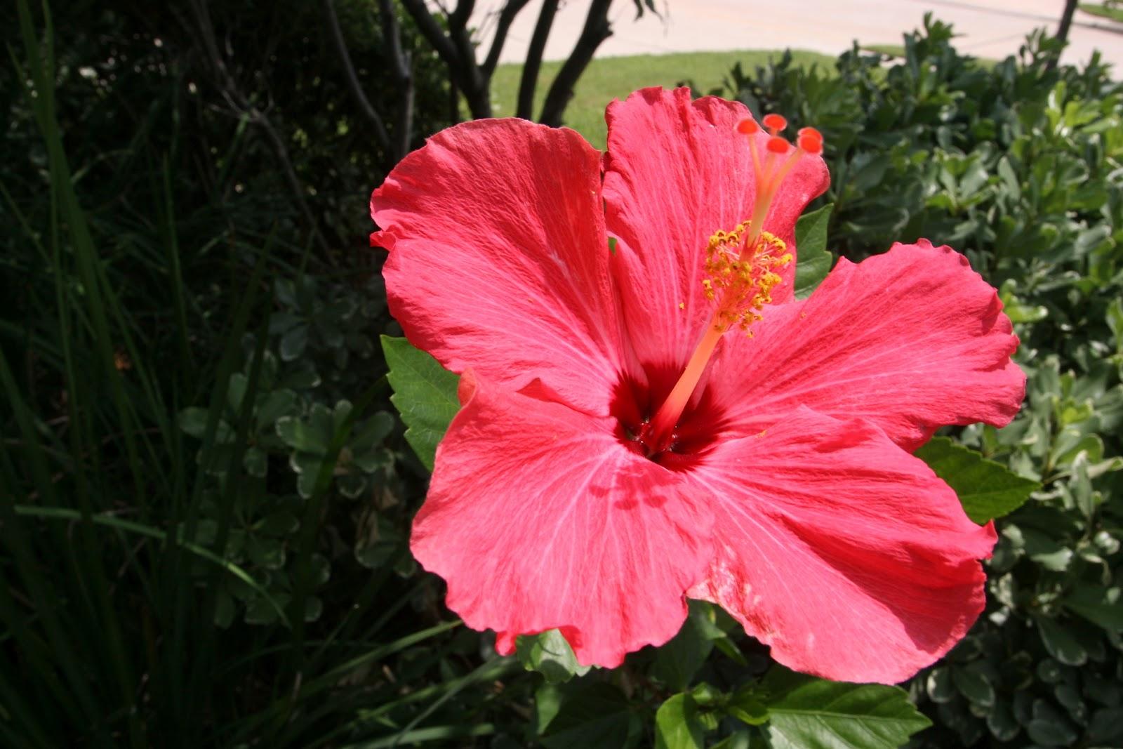 Gardening 2012 - IMG_3856.JPG