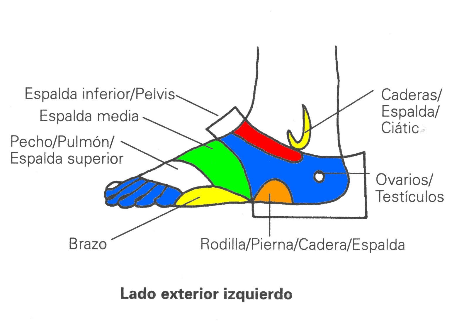 Reflexologia: Lado exterior izquierdo