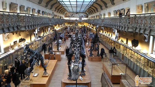 Museos Paris Historia Natural 11
